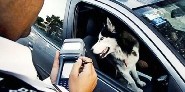 پلیس راهور: جابجایی حیوان در خودرو باید با جعبه مخصوص باشد