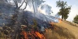 شعلههای آتشی که جنگلهای بمو را در بر گرفت مهار شد