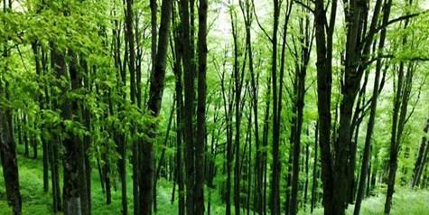 امضای تفاهمنامه میان سازمان جنگلها و ستاد مقابله با قاچاق
